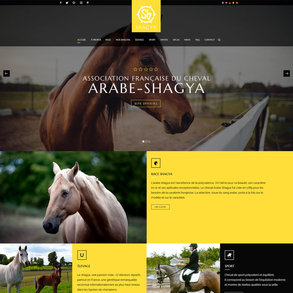 Shagya France - association française du cheval Shagya